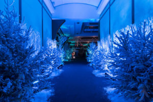 Blue-lit hallway with snowy pine trees