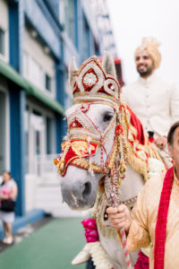 Groom in a white horse, Indian wedding